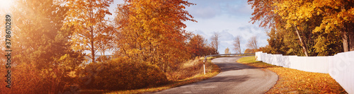 Cuadros en Lienzo old asphalt road with beautiful trees in autumn