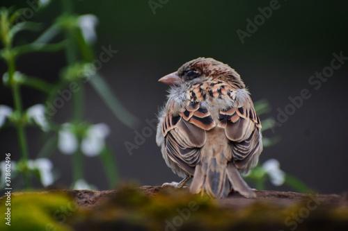 Valokuva bird on a branch