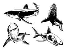 Vector Set Of Sharks Isolated ...