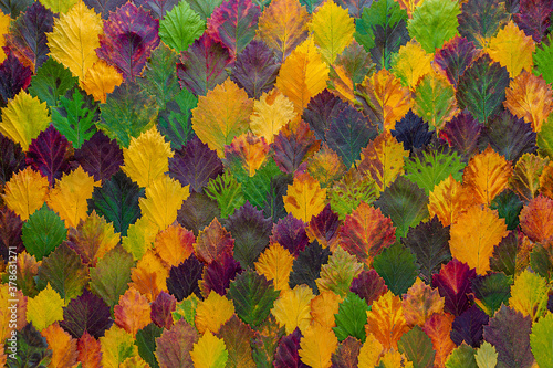 pattern of colorful autumn leaves