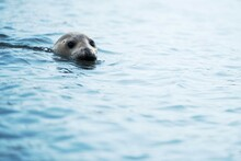 Wild Seal Watching To Me
