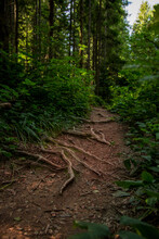 Green Forest Nature Landscape Vertical Photography Dirt Route For Walking Between Summer Foliage Wilderness Environment