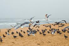 Sand Beach And Flock Of Birds,...