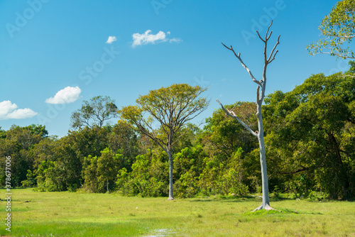 Pocone, Mato Grosso, Brazil on June 14, 2015 Fototapeta