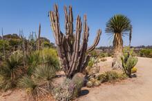 Cactuses And Tropical Plants Balboa Park San Diego CA.