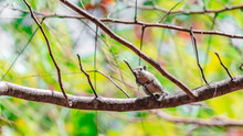 Funny Chipmunk On The Tree In ...