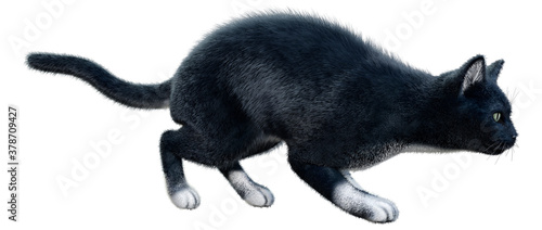 Foto 3D Rendering Black Cat on White