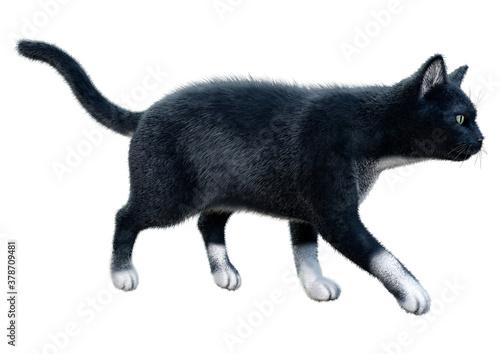 Foto 3D Rendering Black Cat on White