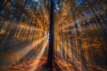 Beautiful Sun Rays In Autumn M...