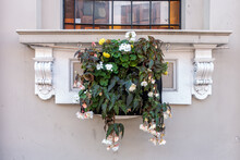 Bedding Plants In A Planter Hanging From An Exterior Window Sill On The Outside Of A Building.