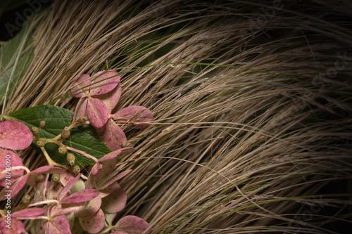 Hydrangea paniculata. Różowe kwiaty hortensji bukietowej na tle ozdobnej trawy.