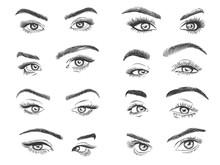 Female Eyes. Glamour Eye Lashes Woman With Perfectly Shaped Eyebrows, Drawn Black Model Eyelashes, Design For Makeup Salon Promo Vector Set. Fashion Girl Eyes For Beauty Studio Logo Or Advert