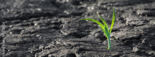 Foto Lonely green sprout in dry cracked ground