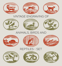 Vintage Engraving Of Animals, Birds And Reptiles Set From From The Baltimore Type Foundry 1832