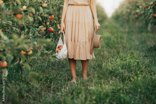 Carta da parati Woman in dress holding white basket with ripe organic apples in orchard or on farm on a fall day