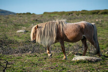 Carneddau Pony,late Summer In The Snowdonia National Park