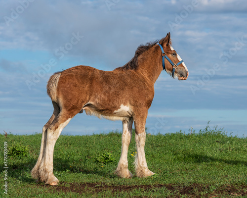 Foto foal standing on a hill