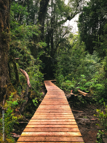 Okleiny na drzwi - Lasy - Drzewa  panoramic-shot-of-a-wooden-pathway-in-the-middle-of-a-forest