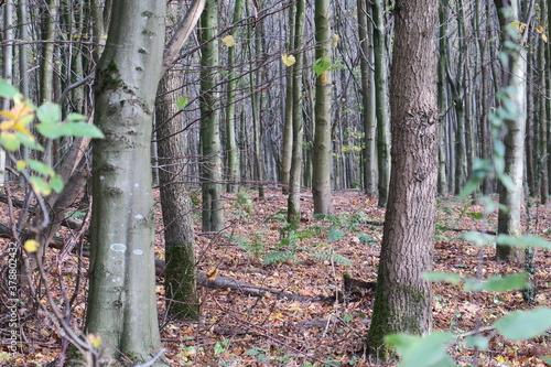 Im Wald 16 © Spotlight Nord