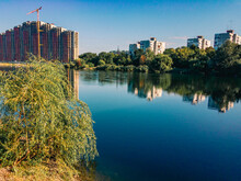 Lakeside With Growing Reeds, W...