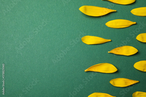 Fotomural Fresh yellow sunflower petals on green background, flat lay