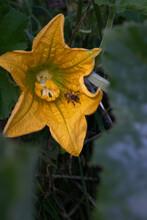 Little Bee In Yellow Gourd Bird Flower