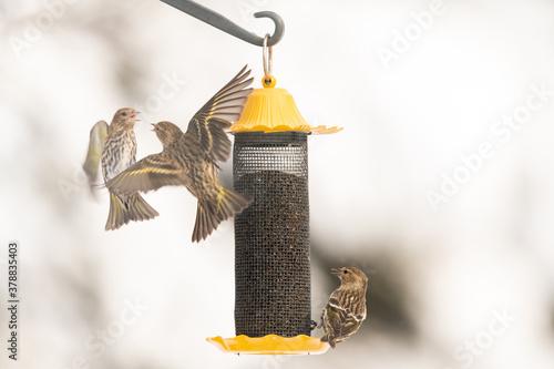 birds gathering at the bird  feeder in winter Canvas-taulu