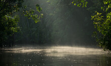 Ray Of Light Through The Canopee