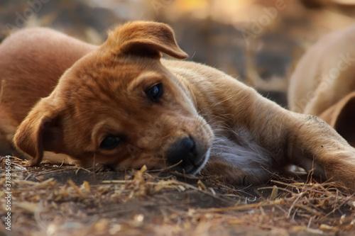 Fototapeta A cute innocent puppy