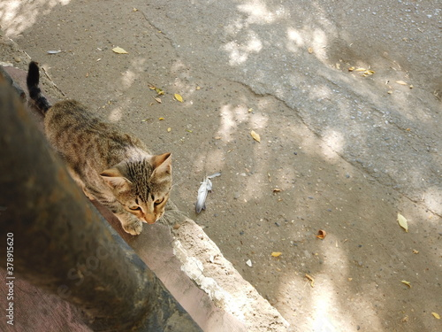 Nice feral cat is walking on fence Canvas Print