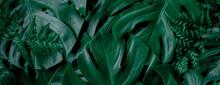Tropical Wet Bright Green Leav...