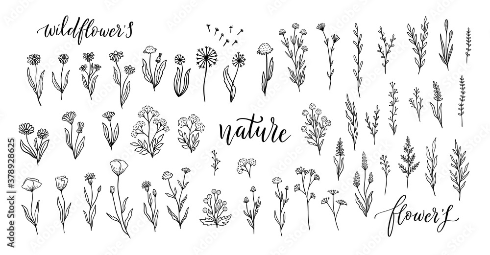 Fototapeta Wildflower line art set. Flower doodle botanical collection. Herbal and meadow plants, grass. Vector illustration isolated.