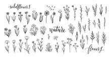 Wildflower Line Art Set. Flowe...