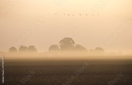 Foto foggy morning, winches fly