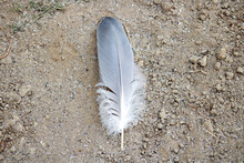 Feather On The Sand