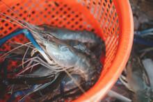 Above Shot Of Fresh Raw Shrimp...