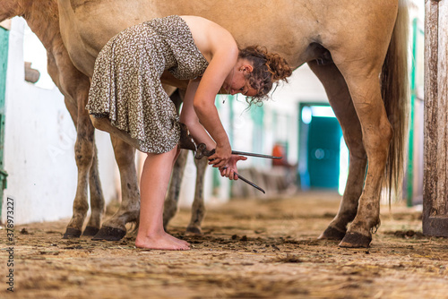 Fotografia The girl in the stable is cleaning the horses' hooves.