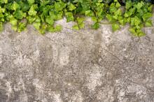 Planta Trepadora Verde Sobre P...