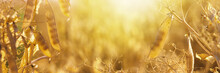 Rural Landscape, Banner - Pea Field In The Rays Of The Summer Sun, Closeup With Space For Text