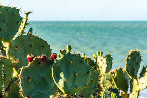 Photo Cactos do deserto com flores vermelhas na beira do mar.