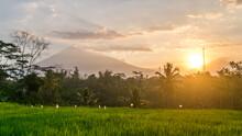 Beautiful View Of Rice Fields,...
