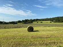 Bales Of Hay, In A Freshly Cut Cornfield, With Trees On The Horizon In, Eshton, Bradford, UK