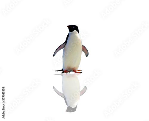 penguin isolated on white background Slika na platnu