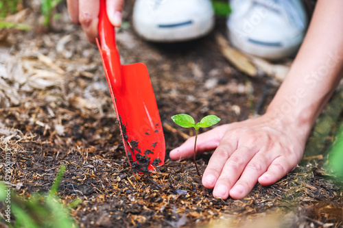 Fototapeta Closeup image of a woman using shovel to plant a small tree in the garden obraz