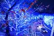 canvas print picture - 青白いイルミネーションをバックに浮かび上がる樹形と紅葉
