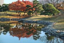 紅葉時期の庭園の水面に映った赤いの葉