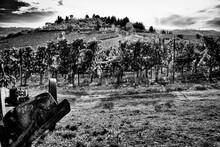 Old Farm Tractor In Field