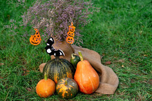 Autumn Composition Of Dried Flowers And Pumpkins On Burlap And Green Grass With Elements Of Halloween Decor. Soft Selective Focus.