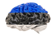 Human Brain With Estonian Flag...