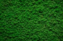 Dark Green Moss Texture, Inter...